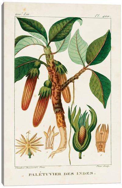 Turpin Foliage & Fruit I Canvas Art Print