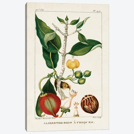 Turpin Foliage & Fruit III Canvas Print #TPN17} by Turpin Canvas Art