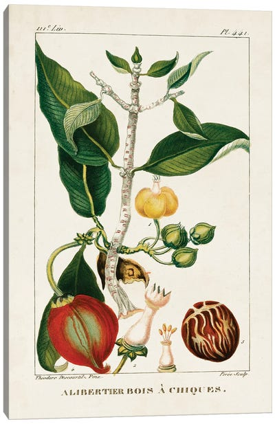 Turpin Foliage & Fruit III Canvas Art Print