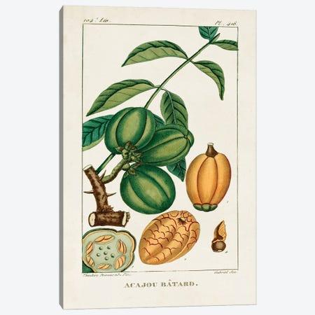 Turpin Foliage & Fruit IV Canvas Print #TPN18} by Turpin Canvas Art Print
