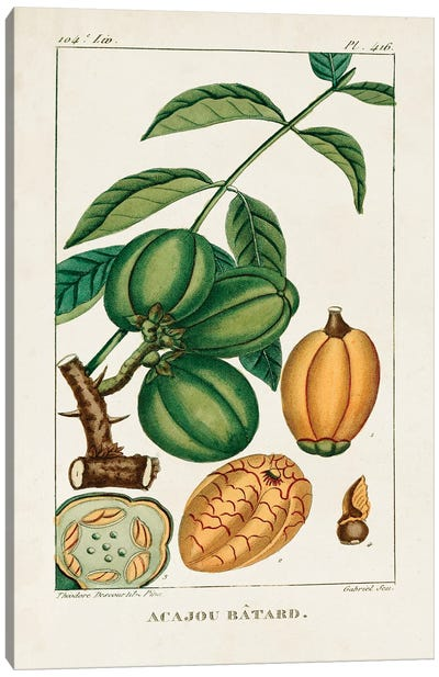 Turpin Foliage & Fruit IV Canvas Art Print