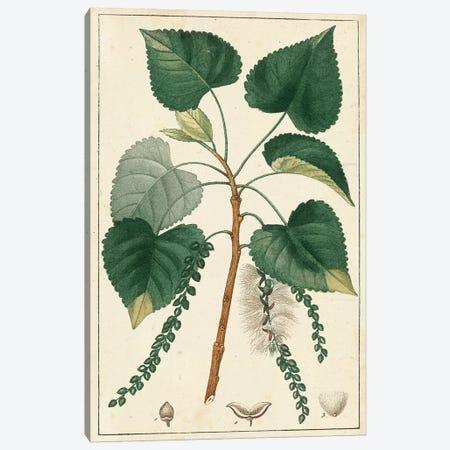Poplar Tree  3-Piece Canvas #TPN2} by Turpin Canvas Art Print