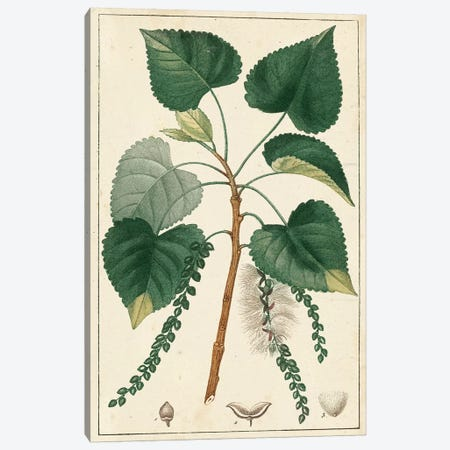 Poplar Tree  Canvas Print #TPN2} by Turpin Canvas Art Print