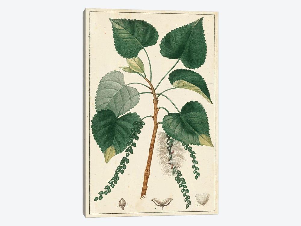 Poplar Tree  by Turpin 1-piece Canvas Art