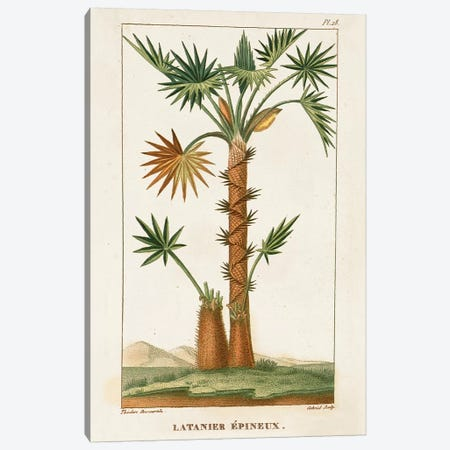 Exotic Palms I Canvas Print #TPN3} by Turpin Canvas Art Print
