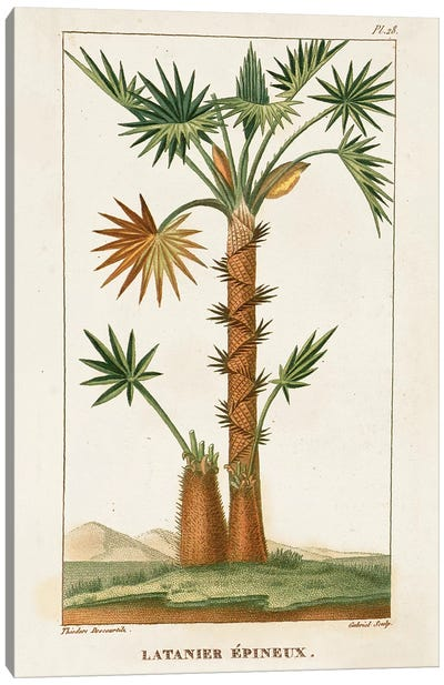 Exotic Palms I Canvas Art Print