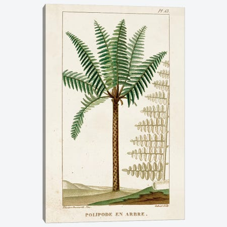 Exotic Palms III Canvas Print #TPN5} by Turpin Canvas Art