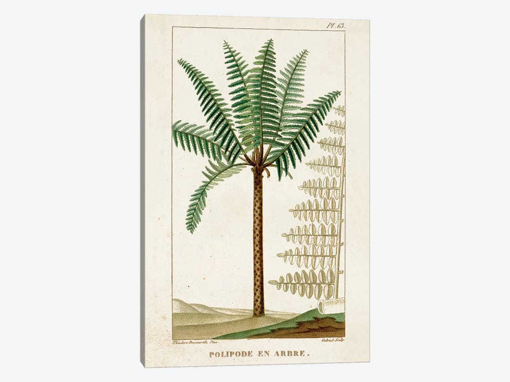 Exotic Palms III by Turpin 1-piece Canvas Print
