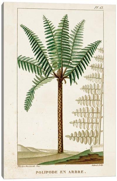 Exotic Palms III Canvas Art Print