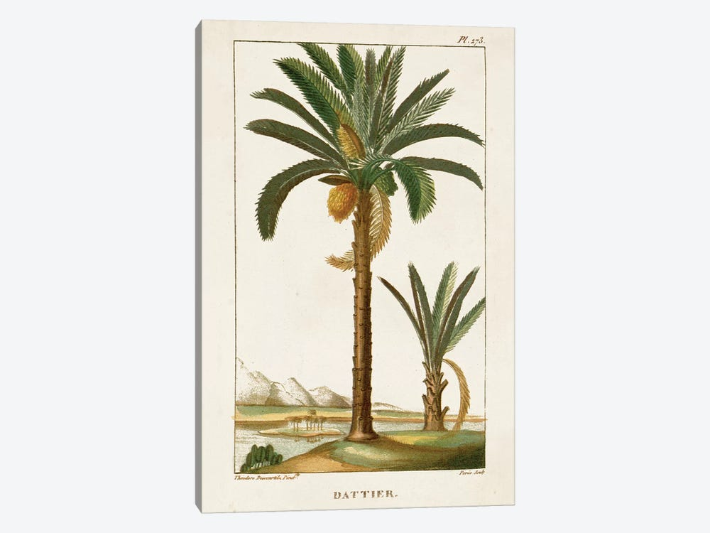 Exotic Palms IV by Turpin 1-piece Canvas Wall Art