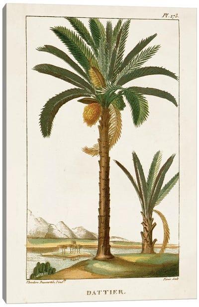 Exotic Palms IV Canvas Art Print