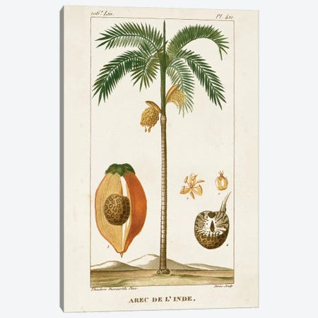 Exotic Palms V Canvas Print #TPN7} by Turpin Canvas Artwork