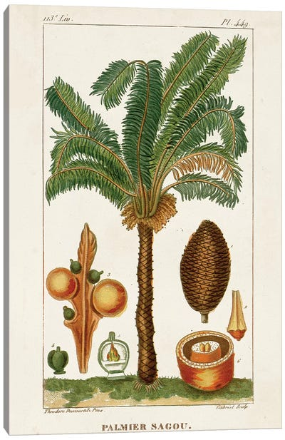 Exotic Palms VII Canvas Art Print