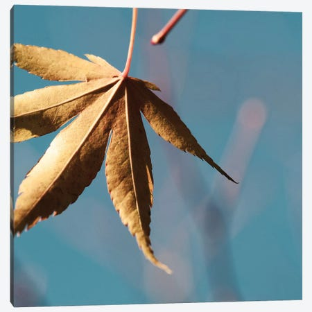Fall Leaves VIII Canvas Print #TQU100} by Tom Quartermaine Canvas Wall Art