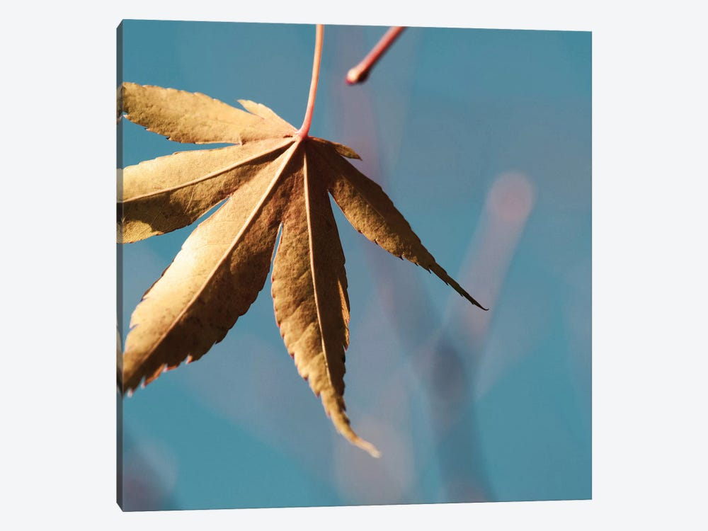 Fall Leaves VIII by Tom Quartermaine 1-piece Art Print