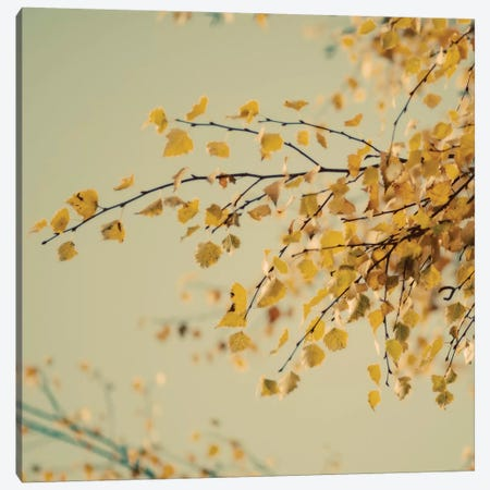 Fall Leaves IX Canvas Print #TQU101} by Tom Quartermaine Canvas Artwork