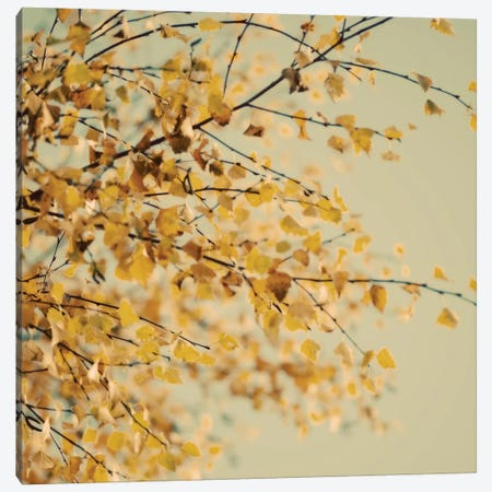Fall Leaves X Canvas Print #TQU102} by Tom Quartermaine Canvas Artwork