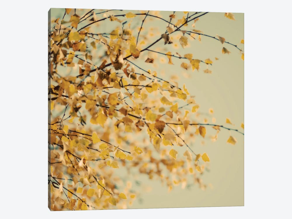 Fall Leaves X by Tom Quartermaine 1-piece Art Print