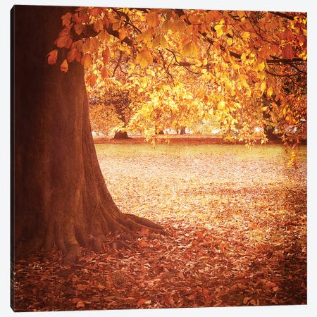 Fall Tree I Canvas Print #TQU103} by Tom Quartermaine Canvas Art