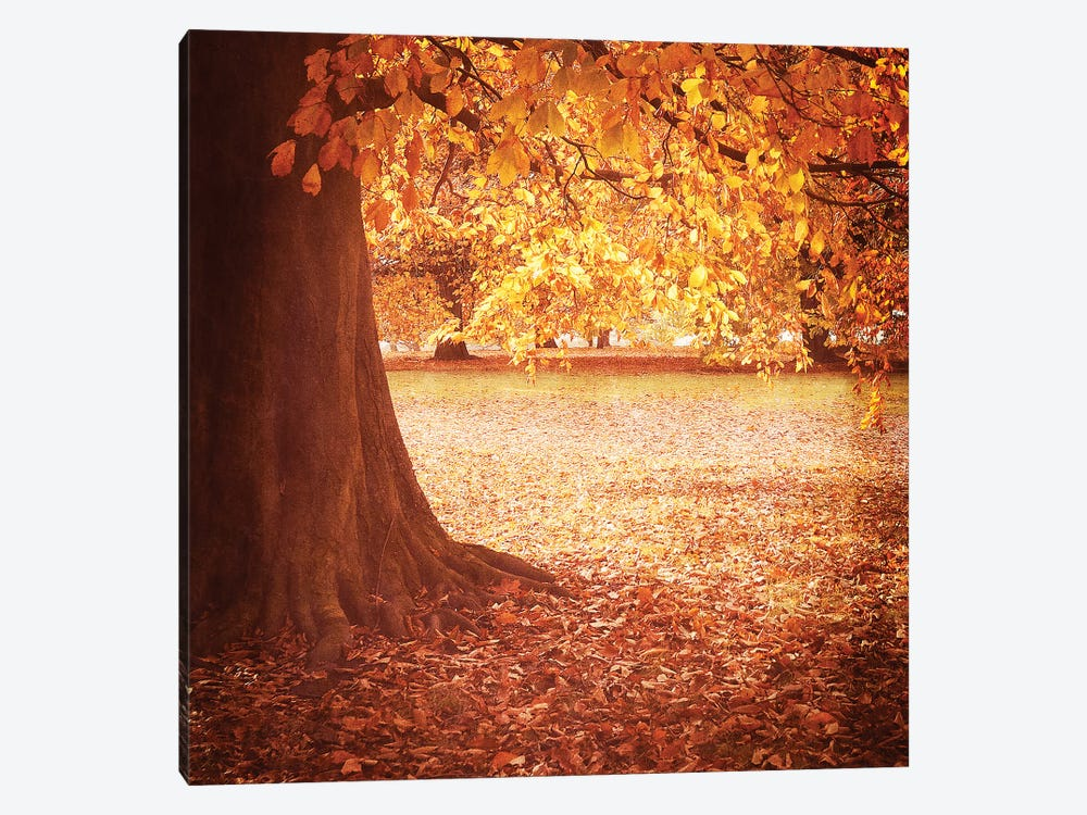 Fall Tree I by Tom Quartermaine 1-piece Canvas Wall Art