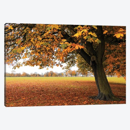 Fall Tree II 3-Piece Canvas #TQU104} by Tom Quartermaine Canvas Art Print