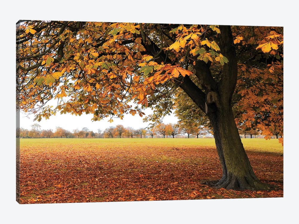Fall Tree II by Tom Quartermaine 1-piece Canvas Art Print