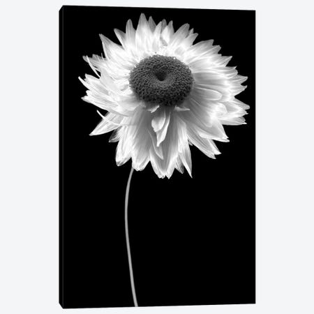 Flower B&W I 3-Piece Canvas #TQU105} by Tom Quartermaine Canvas Print