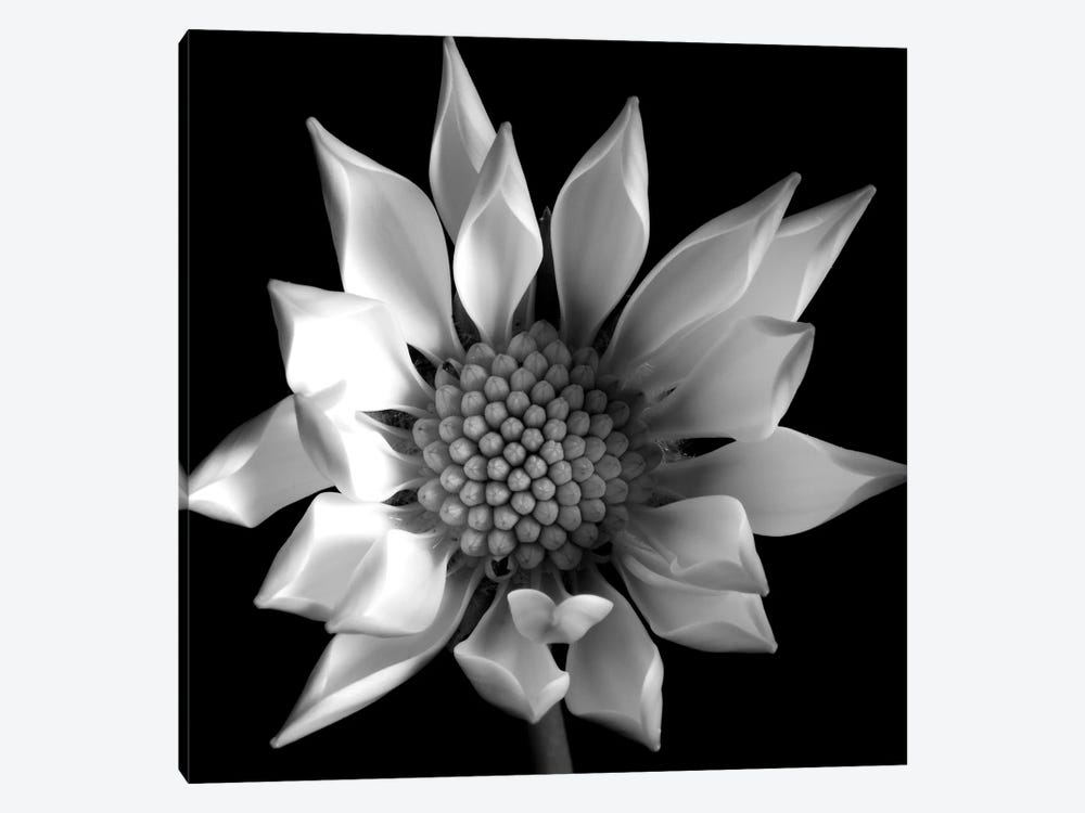 Flower B&W II 1-piece Canvas Art Print