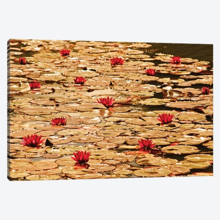 Golden Waterlily Pond 3-Piece Canvas #TQU114} by Tom Quartermaine Canvas Artwork