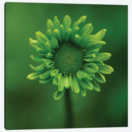 Green Flower On Green 3-Piece Canvas #TQU119} by Tom Quartermaine Art Print