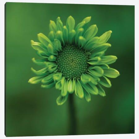 Green Flower On Green Canvas Print #TQU119} by Tom Quartermaine Art Print