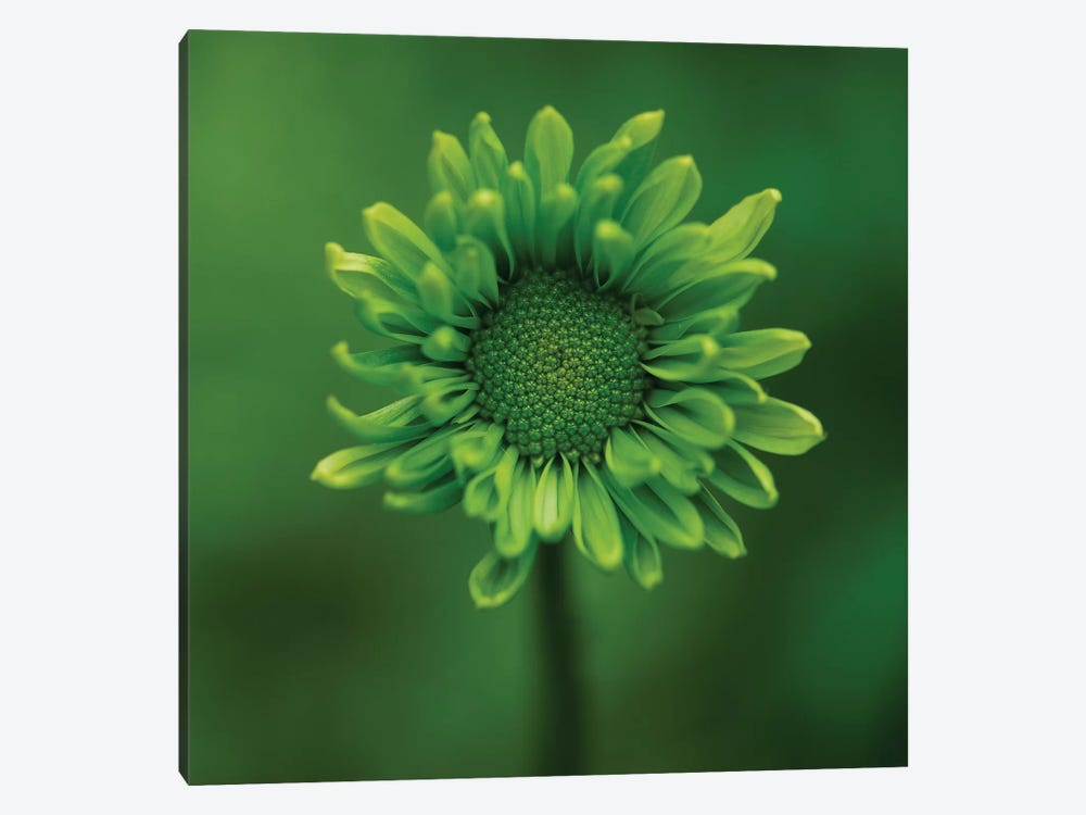 Green Flower On Green by Tom Quartermaine 1-piece Canvas Print