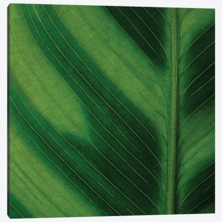 Green Leaf Close-Up I Canvas Print #TQU121} by Tom Quartermaine Canvas Art