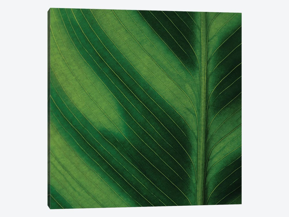 Green Leaf Close-Up I by Tom Quartermaine 1-piece Canvas Art