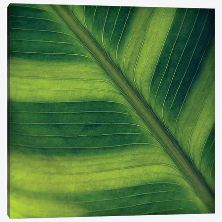 Green Leaf Close-Up II Canvas Print #TQU122} by Tom Quartermaine Canvas Art