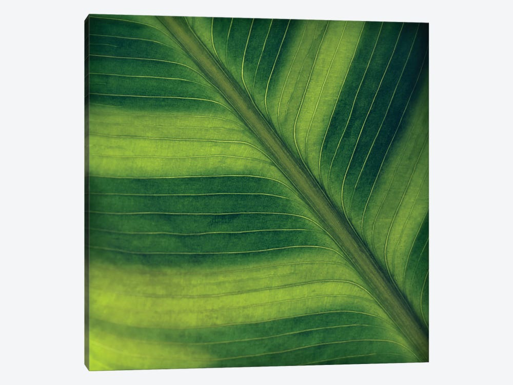 Green Leaf Close-Up II by Tom Quartermaine 1-piece Canvas Art Print