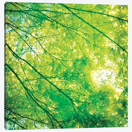 Green Leaves I Canvas Print #TQU123} by Tom Quartermaine Canvas Art