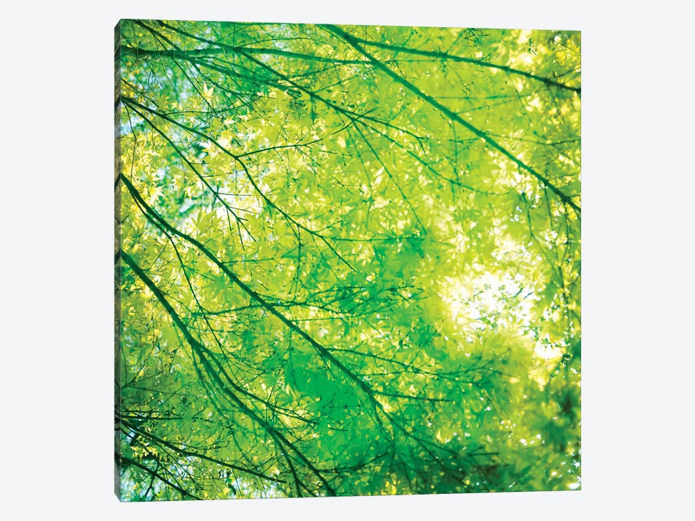 Green Leaves I by Tom Quartermaine 1-piece Canvas Art
