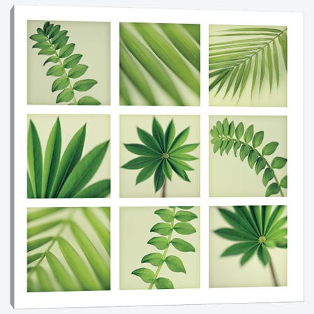 Grid Of 9 Leaves 3-Piece Canvas #TQU125} by Tom Quartermaine Canvas Print