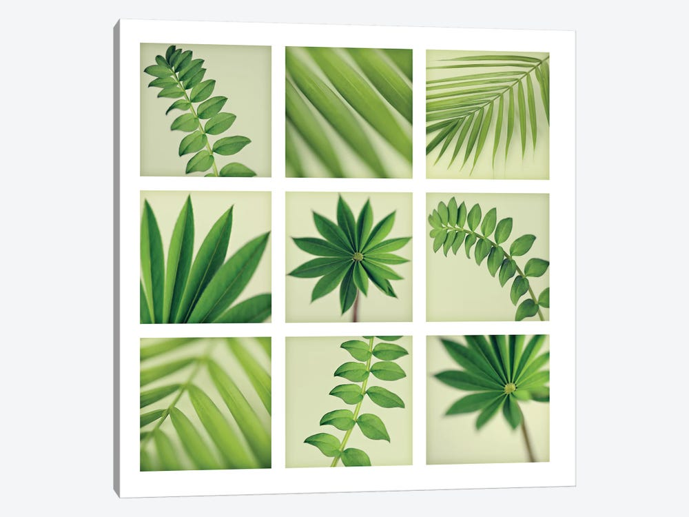 Grid Of 9 Leaves 1-piece Canvas Wall Art