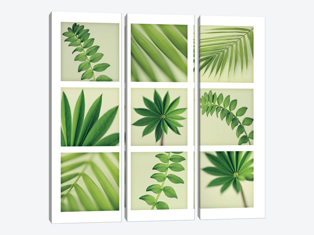 Grid Of 9 Leaves 3-piece Canvas Artwork