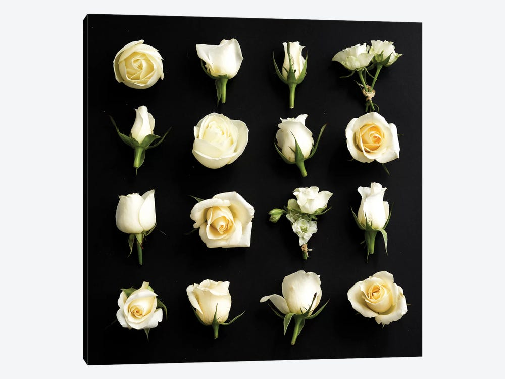 Grid Of Cream Roses On Black by Tom Quartermaine 1-piece Canvas Art Print