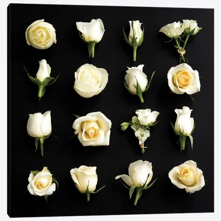 Grid Of Cream Roses On Black 3-Piece Canvas #TQU126} by Tom Quartermaine Art Print