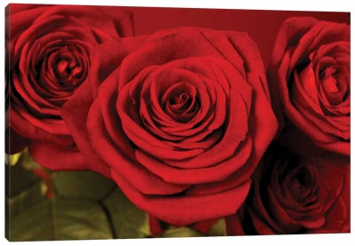 3 Red Roses Canvas Art Print