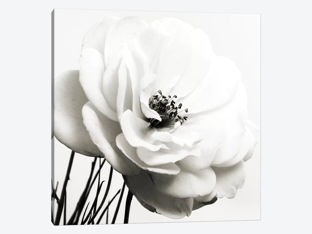 Iceberg Rose B&W by Tom Quartermaine 1-piece Canvas Artwork