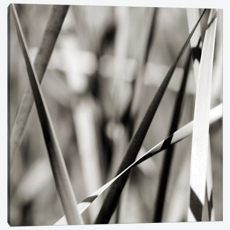 Leaves B&W II Canvas Print #TQU149} by Tom Quartermaine Canvas Wall Art