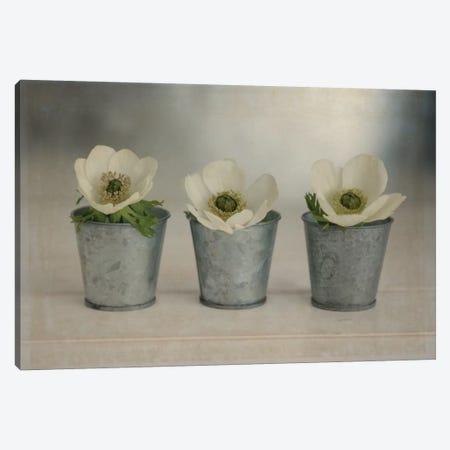 3 White Anemones In Metal Vases Canvas Print #TQU14} by Tom Quartermaine Canvas Wall Art