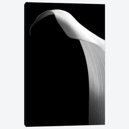 Lily On Black I Canvas Print #TQU155} by Tom Quartermaine Canvas Wall Art
