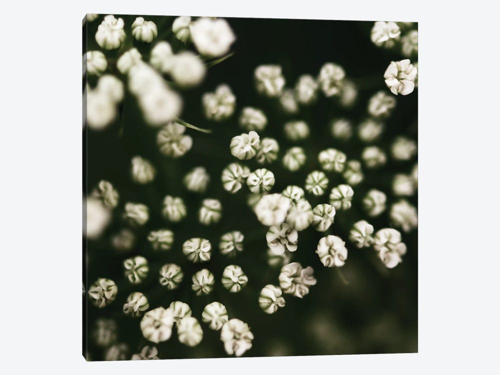 Little White Flowers 1-piece Canvas Artwork