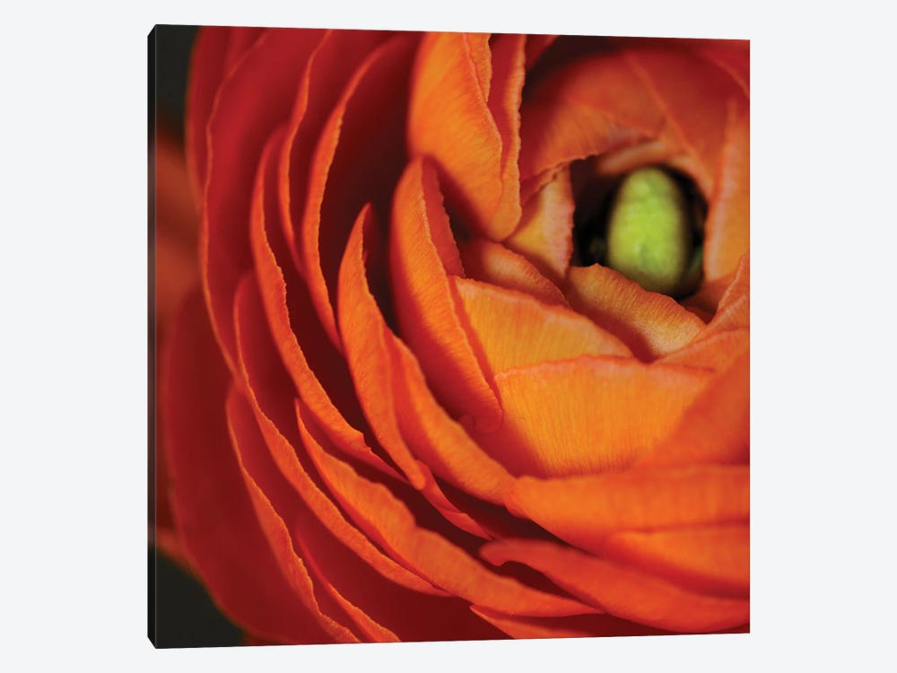 Orange Flower Close-Up by Tom Quartermaine 1-piece Canvas Art